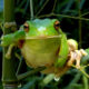 04 - Healing - Frog 1